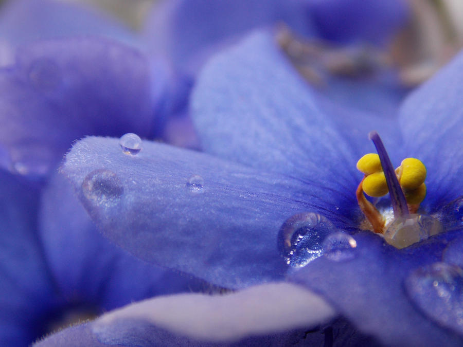 Flower by BabusAnna