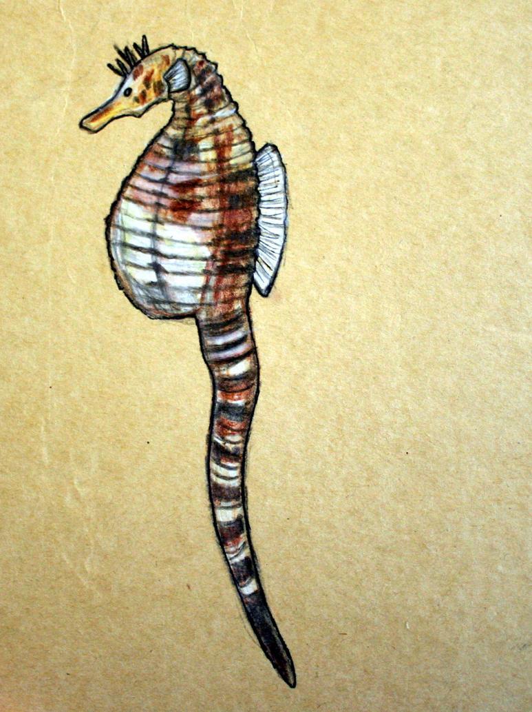 Big-bellied seahorse by Twimper