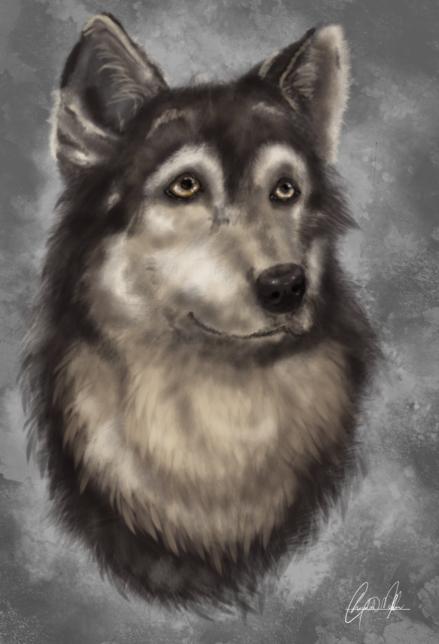 Wolf by Smezz