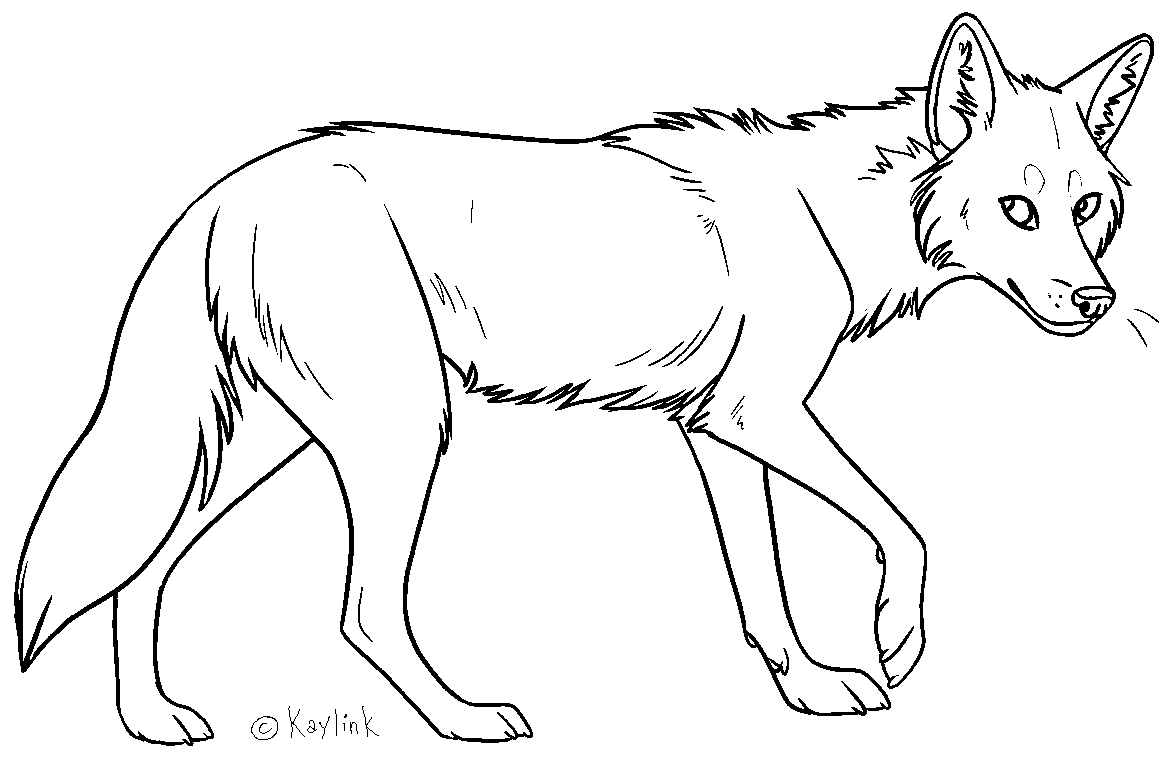 Simple Wolf Lineart : Coyote lineart by kaylink on deviantart