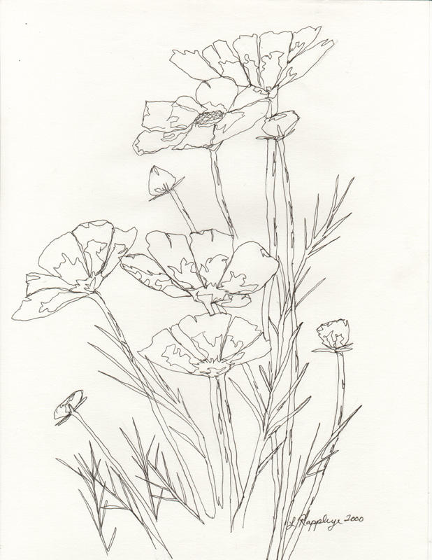 Single Line Drawing Flowers : Flower line drawing by butterflylr on deviantart