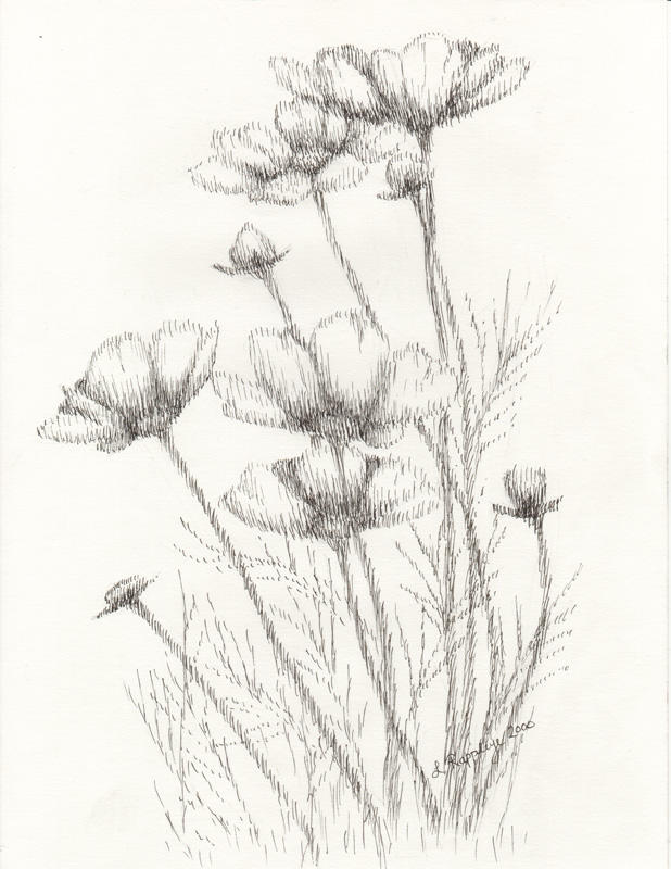 Simple Butterfly Sketches Soft flower drawing by...