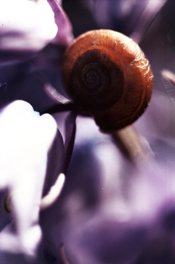 Zeiss Snail by tractern