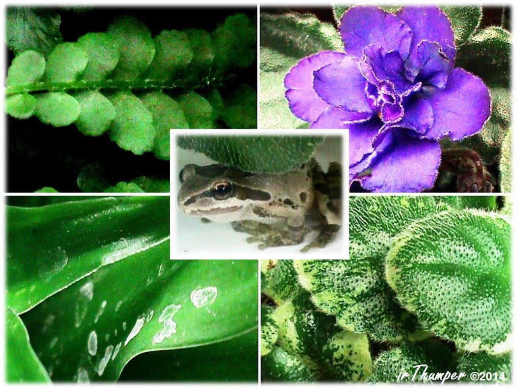 Tree Frog and Foliage Collage1 by IrThumper