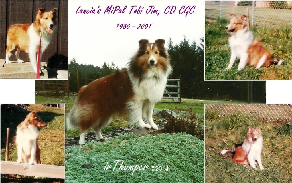 Tobi Jim Puppy to Adult Collage