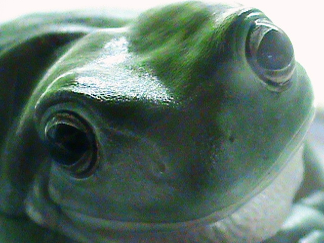 Happy Faced Smiling Frog by IrThumper