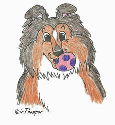 Lets Play a Sheltie Ruff Draft by irThumper C.2012