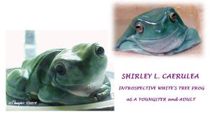 Shirley Introspective White's Tree Frog