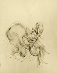 anatomical drawing 07 bones of the pelvic girdle