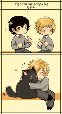 Why Sirius loves being a dog