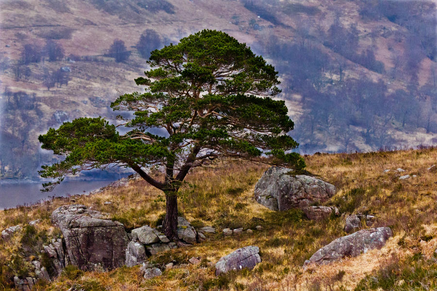Lonesome Pine by derekbeattieimages