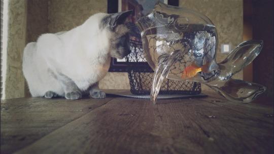 Goldfish by breyerlover321