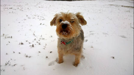 Texas snowing