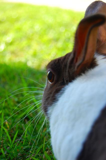 Bunny by greycookievomit-yum