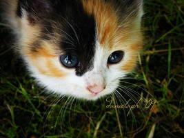 Look at me.. by violetda