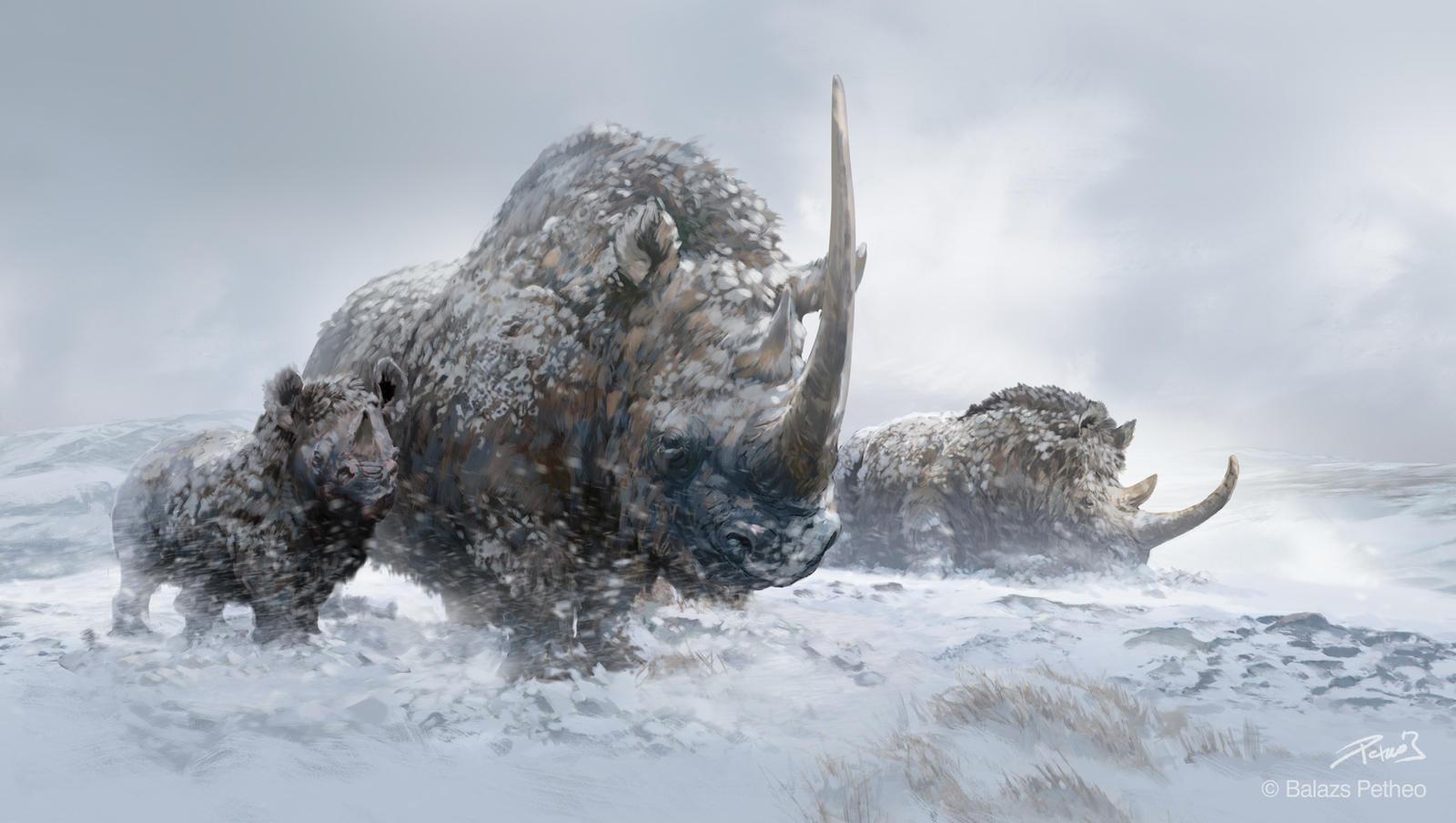 woolly_rhinos_by_balcsika-d7fsx41.jpg