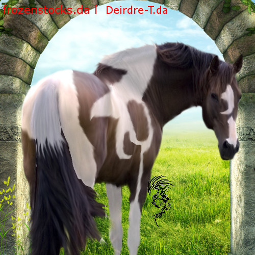 Bay Andalusian Stallion By Deirdre T-d58lhhd by Galactic-Designs
