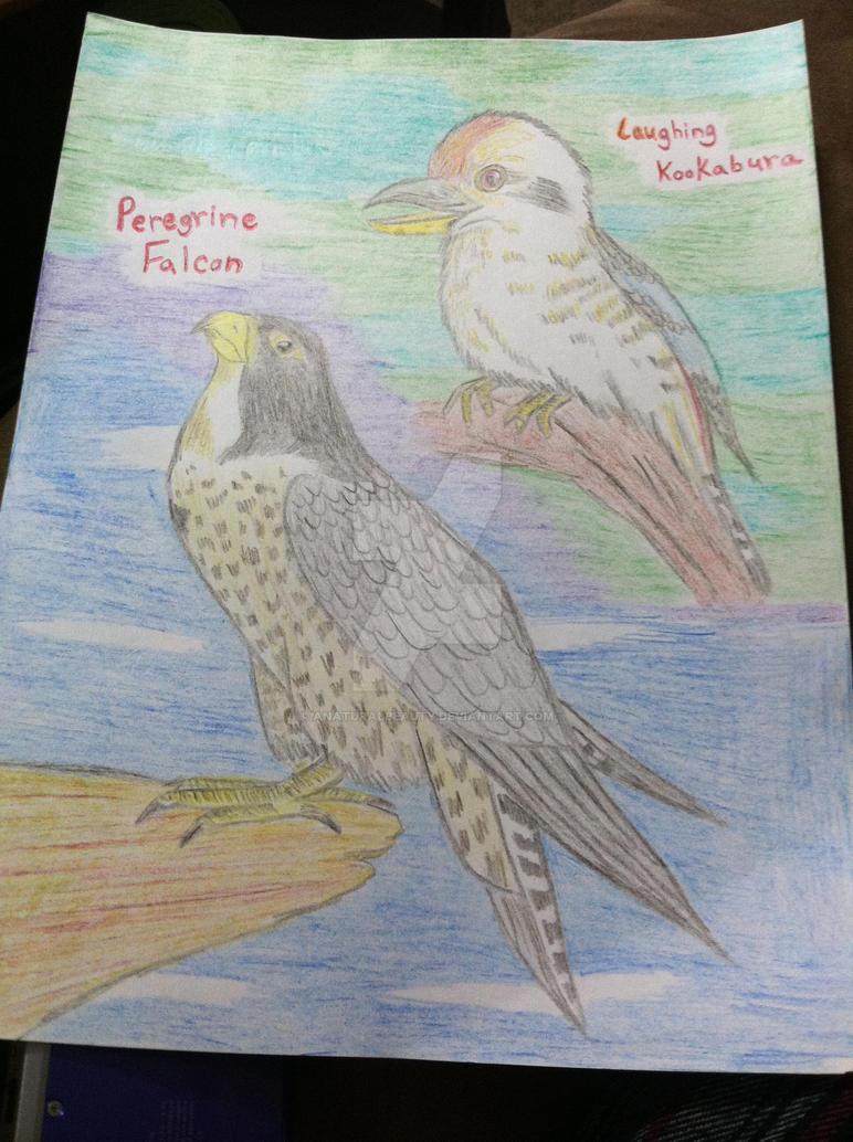 Peregrine Falcon and Laughing Kookabura by AnaturalBeauty
