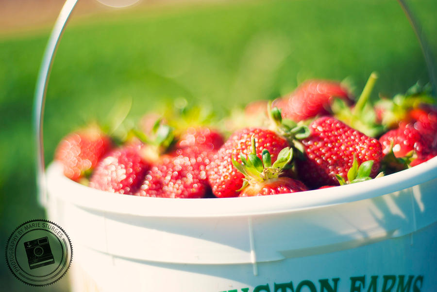 Strawberry Festival by mariesturges