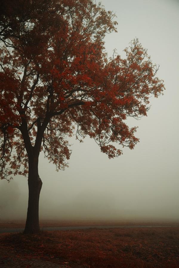 Peaceful moments by artofinvi