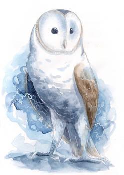 Watercolor Barn Owl