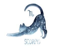 Zodiac Cat - Scorpio