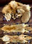 Bobtail Kodiak Red Fox