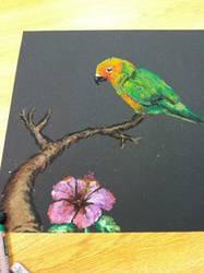 Parrot on Black Paper