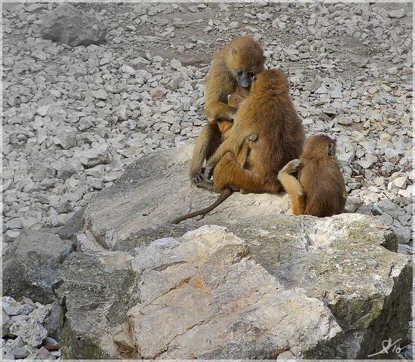 http://fc09.deviantart.net/fs71/i/2010/261/d/d/monkey_by_ginl-d2yykbh.jpg