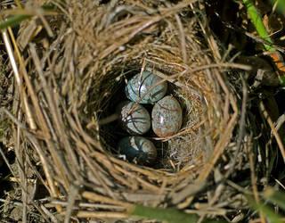 birds nest by Spinnfoto