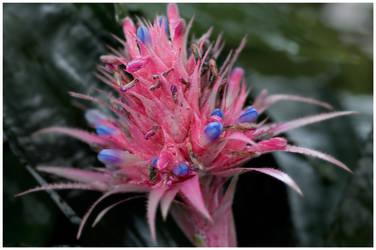 flower by Spinnfoto