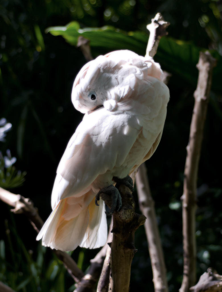 mystical bird by Spinnfoto