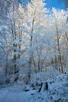 White Forest by Nichofsky