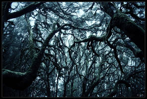 Horror Trees by Nichofsky