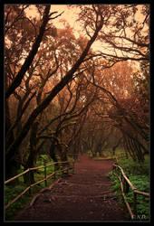 Way To Serenity