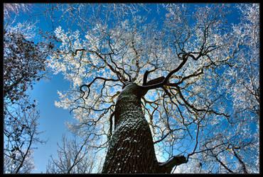 Frozen Tree by Nichofsky