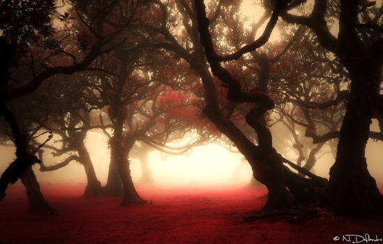 Misty Forest I (Fantasy Version)