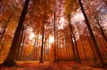 Autumn Splendor by Nichofsky
