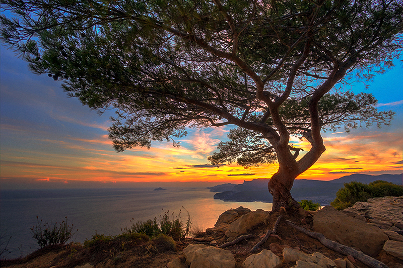 Cassis by Nichofsky