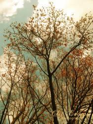 Splendour of the tree by ChiiEvans