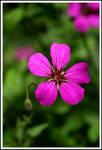 Purple Flower...