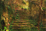 The Old Steps...