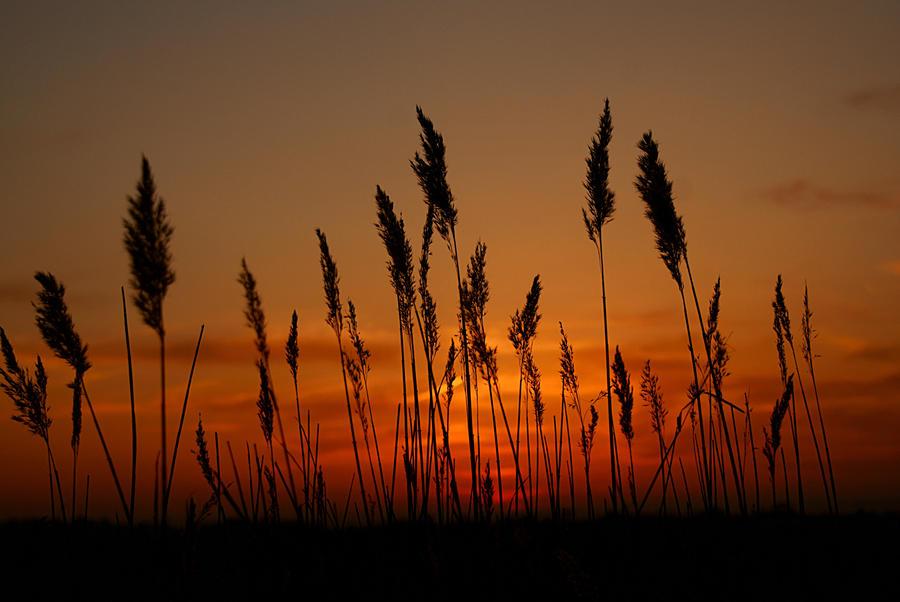 Sunset Grass... by TheBaldingOne on DeviantArt