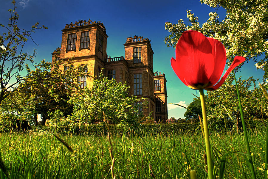 Hardwick Hall and Tulip... by TheBaldingOne