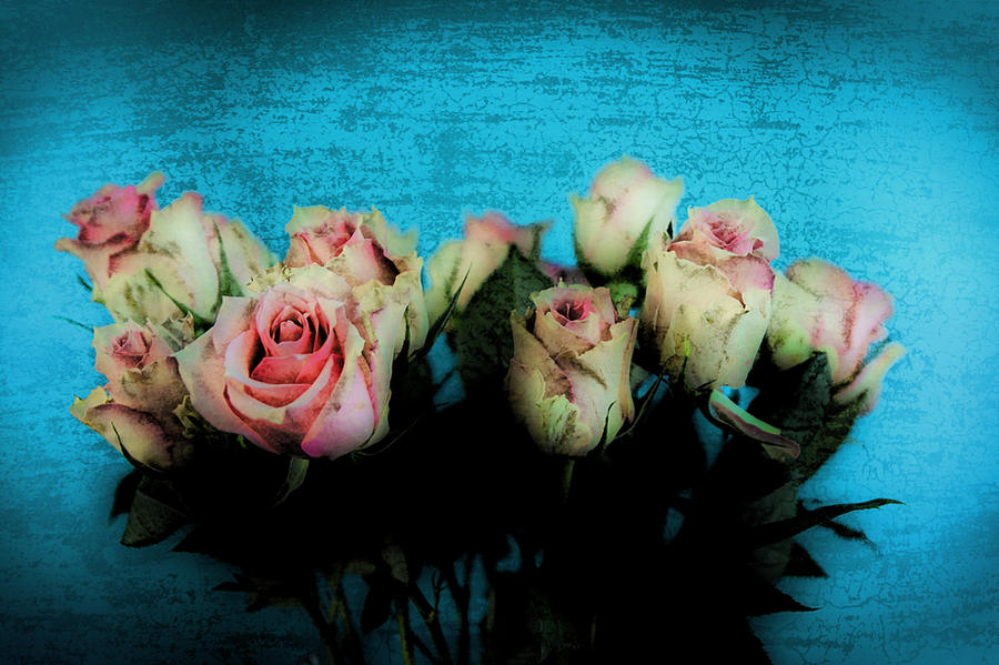 Roses I... by TheBaldingOne