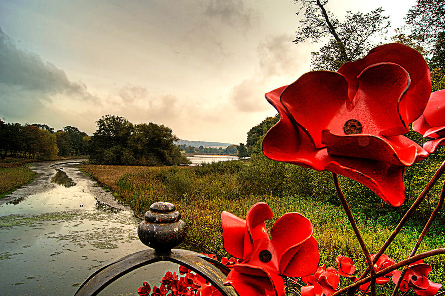 Poppies:Wave and the Lower Lake... by TheBaldingOne