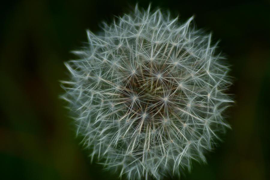Dandelion Seed Head... by TheBaldingOne