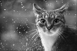 Rainy days by imaginary-days
