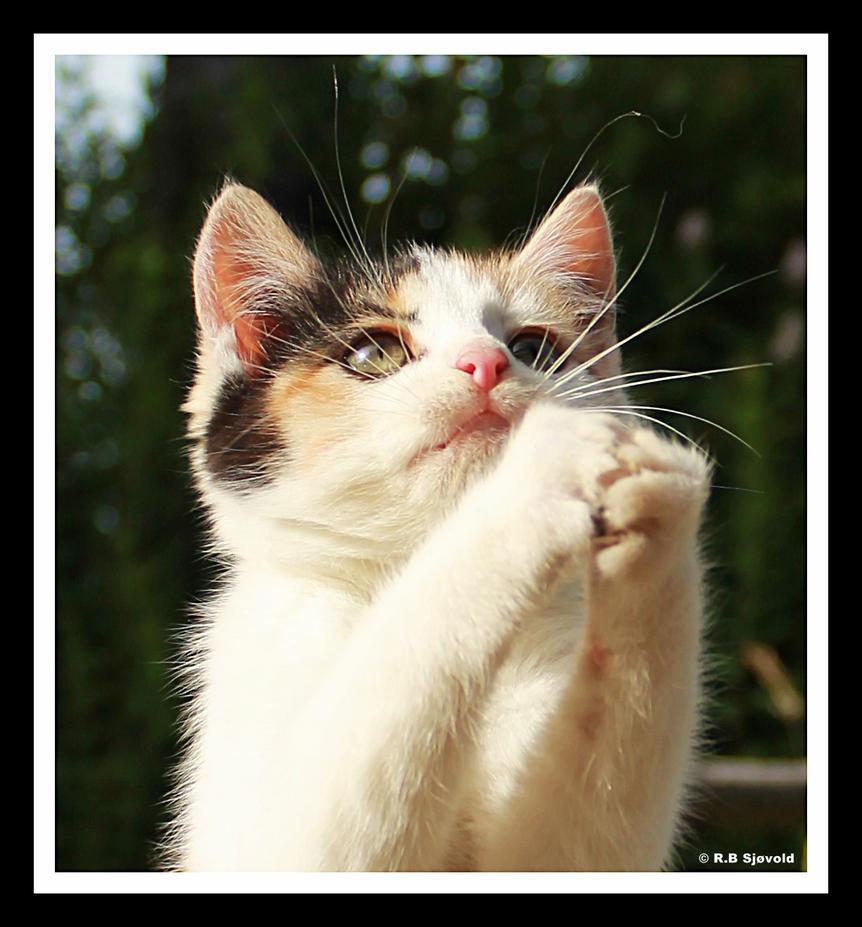 Please God, give me fish tonight! by Blodsravn