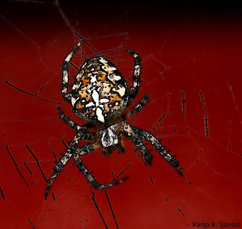 cross spider by Blodsravn
